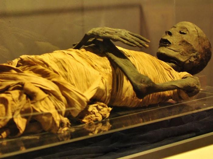122555 قاعة المومياوات بالمتحف المصرى 5 - حواديت اون لاين
